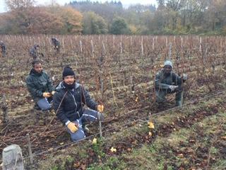Une nouvelle vie, en France et dans les vignes