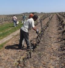 La viticulture recrute : rendez-vous le 3 novembre à Amboise