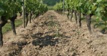 Des MAE pour les vignerons du Layon, de l'Aubance et du Louet