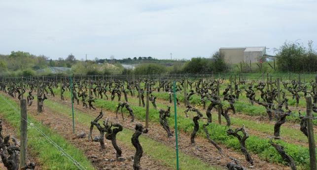 Dans cette carrière, en second plan sur la photo, une centrale de production de bitume a été installée tout près des vignes.