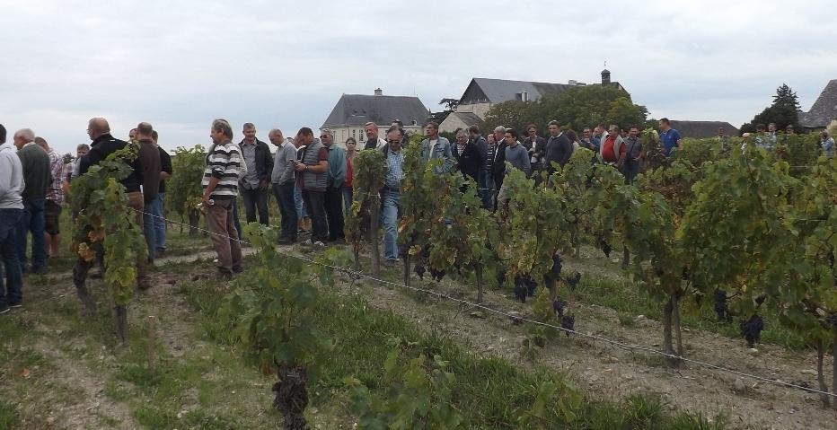 Visites de vignes : le programme