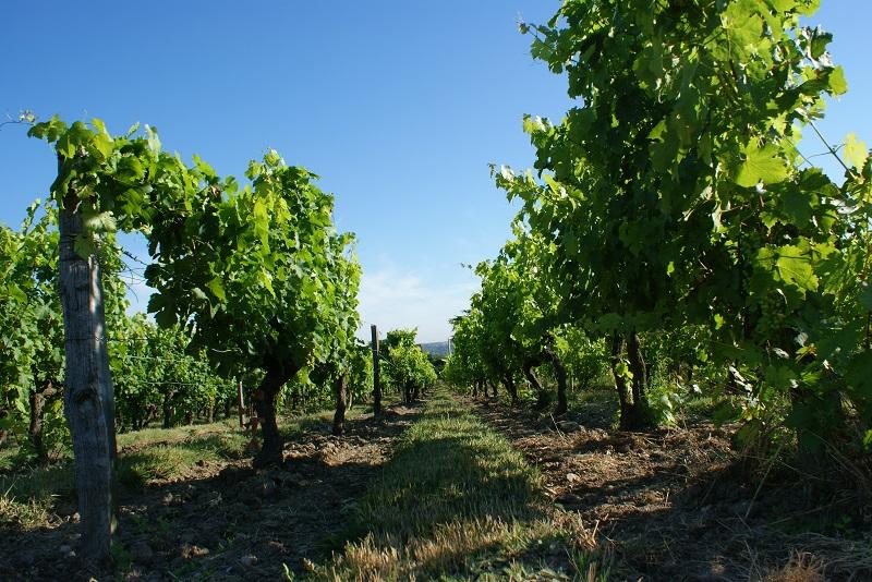+ 3 200 ha en bio sur la Loire depuis 2011