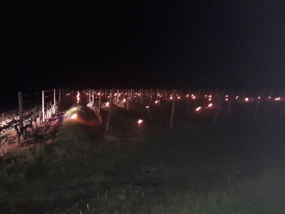 De nombreuses parcelles ont été éclairées au petit matin dans le vignoble ligérien.