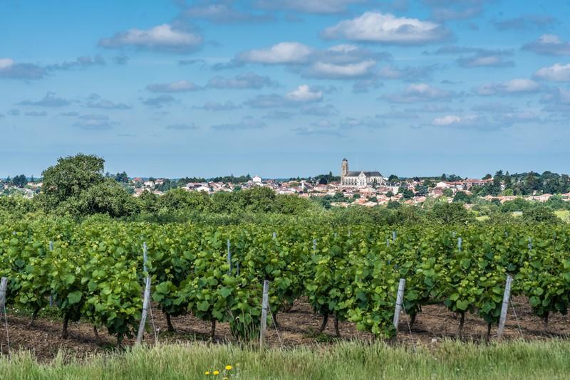 Crédit : Fédération des Vins de Nantes / Emeline Boileau.