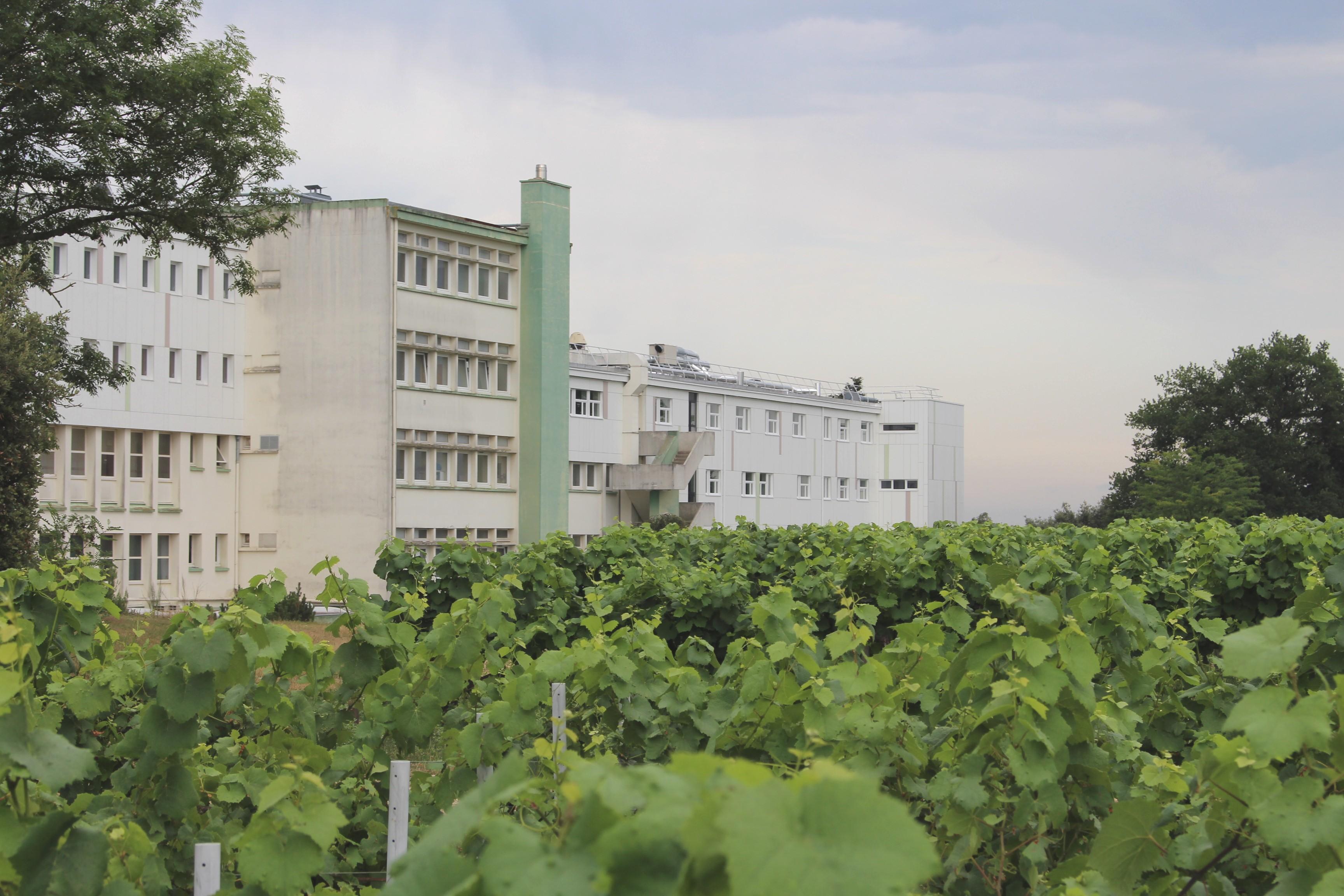 A Briacé, la filière viticole peine à recruter