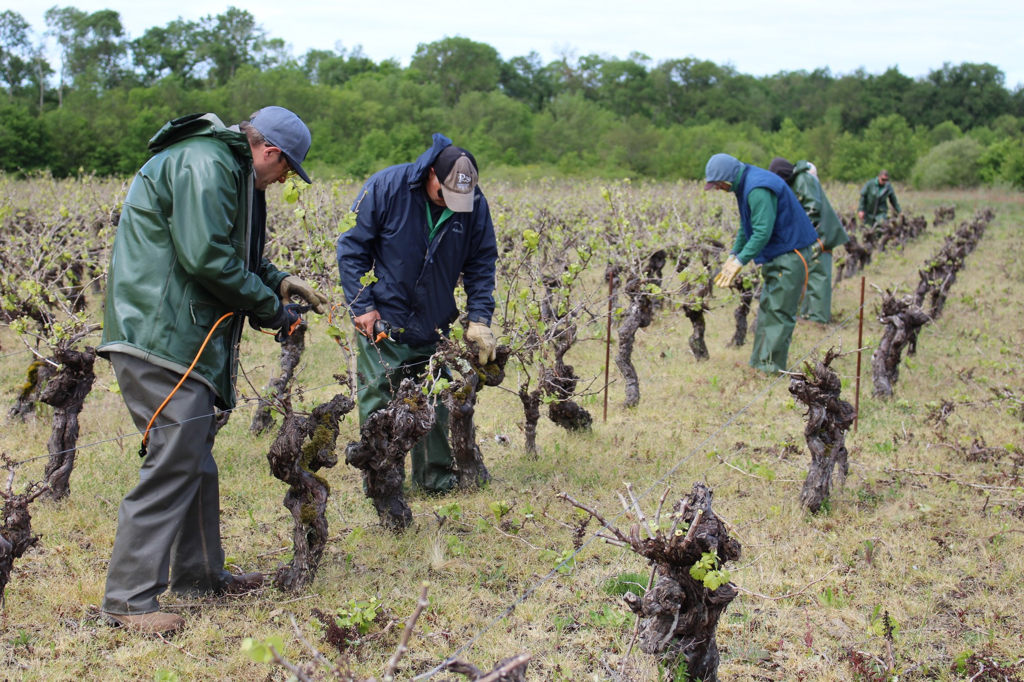 L'Esat Sud-Loire compte 3 équipes spécialisées dans les travaux viticoles manuels.