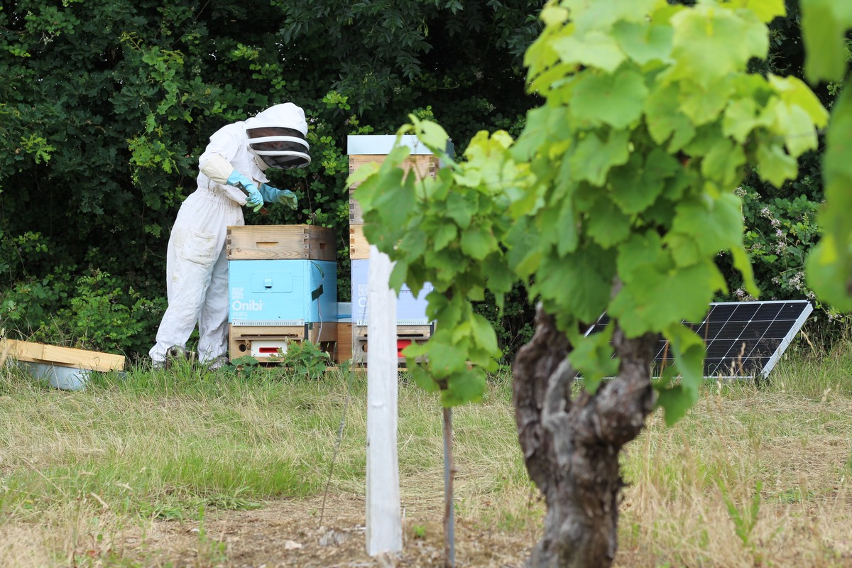 La maintenance des ruches connectées est assurée tous les 15 jours par Bee Futures.