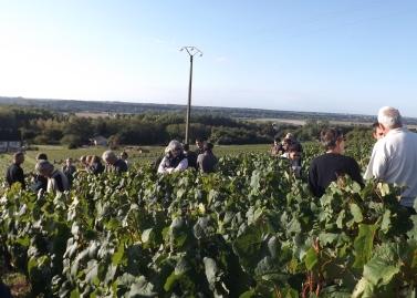 Visites de vignes en Touraine : demandez le programme