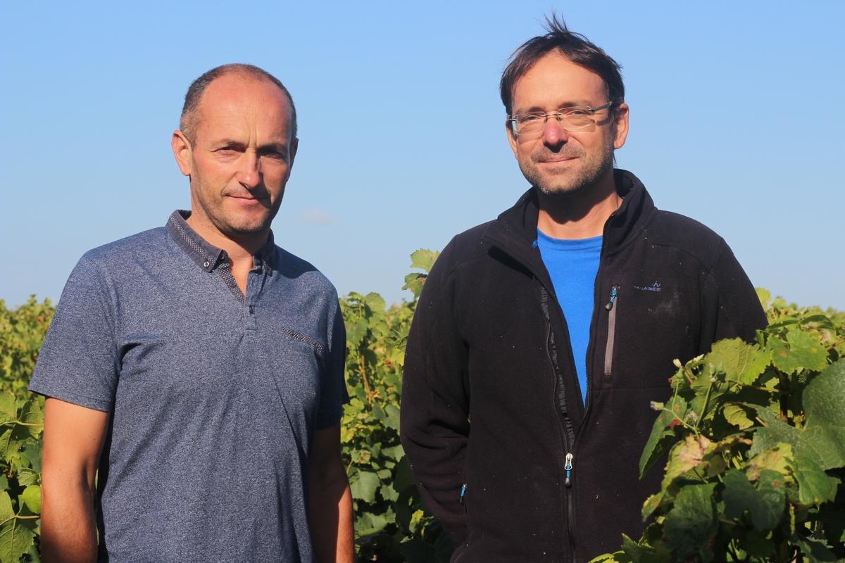 Olivier Beaumard (à gauche) et Frédéric Guilbert dirigent l'exploitation viticole du lycée de Briacé.