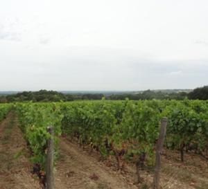 Plus de 3 000 hectares de vignes bio en Centre Val de Loire