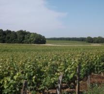 Montlouis : encore plus de vignes préservées
