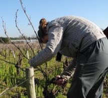 Un groupement d'employeurs pour les vignerons nantais