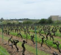 Centrale d'enrobé dans le Layon : la Fédération viticole perd en référé